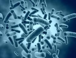 Bakterien im Zahnbelag